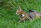 Girafus® Pro-Track-tor Haustier Hund Katze Kleintier Finder Sucher Ortung + Ladegerät - 8