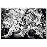 REINDERS Tiger Guckt Dich an - Wandbild 90 x 60 cm