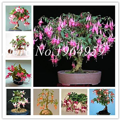 IDEA HIGH Graines-Bonsaï Japonais 100 Pcs Mini Fuchsia Bonsaï Jardin Balcon Bonsaï Lanternes Fleurs Begonia Malus Spectabilis En Pot Floraison: mélangée