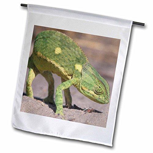 3dRose Botswana, Chobe-NP, Lappenchamäleon Lizard–Bereist Paul Souders–Garten Flagge, 12durch 45,7cm