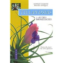 Tillandsias et autres bromeliacées : Comment les choisir et les cultiver facilement