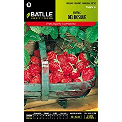 Semillas Batlle 097335BOLS - Fresas del Bosque