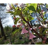 Boucles d'oreilles fleur rose et petits cristaux Swarovski/bijoux rose/tulipes / fleurs du printemps/féerique / romantique/elfique / Reine des Fées/mignon / kawaii/cadeaux pour filles