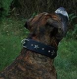 Star Leder Halsband Lederhalsband Breit Hunde Halsband Sterne u Nieten Schwarz unterlegt Tyson M L oder XL (L)