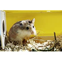 Introduction to Keeping Hamsters