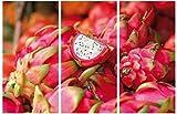 1art1® Frutas - Dragon Fruit, 3 Parts Cuadro, Lienzo Montado sobre Bastidor (120 x 80cm)