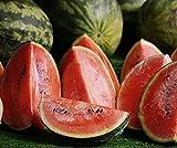Melonen Samen Crimson Sweet