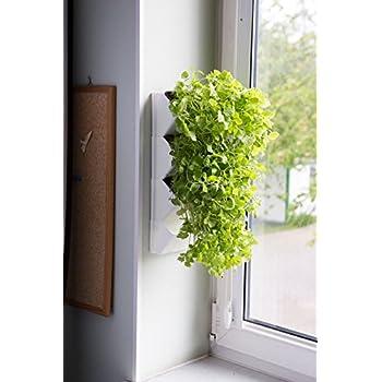 kr utertopf set spicepot von urbanature 3 bert pfe aus beton f r frische kr uter und pflanzen. Black Bedroom Furniture Sets. Home Design Ideas