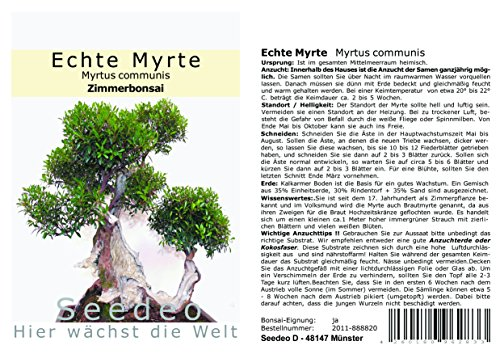 Seedeo Bonsai Anzuchtset Echte Myrte (Myrtus communis)