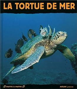 vignette de 'La tortue de mer (Jacques Fretey)'