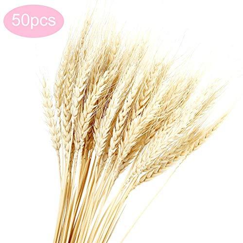 Natural Seca Natural Polillas de trigo, Paquete de tallo de trigo Ramo de trigo decorativo para arreglos florales Accesorios de fotografía Decoración de la boda