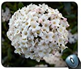 Blumen lila Blumenstrauß 109007Generic Maßgeschneiderte Gummi Mauspad Gaming Mauspad