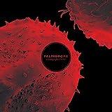 Palindrome: Strange Patterns (Lp+Mp3) [Vinyl LP] (Vinyl)