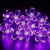 lederTEK Solar Lichterkette 6,4m 50 LED Pfirsichblüte Außenlichterkette Wasserdicht mit Lichtsensor Weihnachtsbeleuchtung, Beleuchtung Deko für Haushalt, Außen, Garten Hochzeit, Weihnachten (Lila)