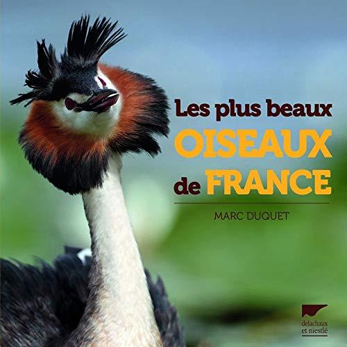 Les plus beaux oiseaux de France par Marc Duquet