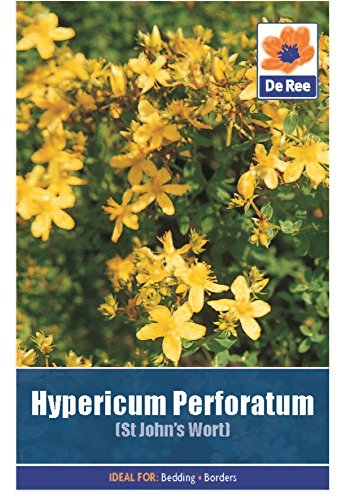2-packs-of-hypericum-perforatum-st-johns-wort-seeds-approximately-485-seeds-per-pack-970-in-total