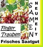15x Finger Trauben Samen Saatgut Pflanze Rarität Garten Obst Neu Sorte Neuheit #129