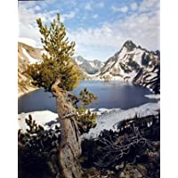 Lone Tree At Crater Lake National Park Scenery Wall Decor Art Print Poster (16x20)