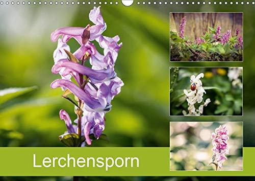 Lerchensporn (Wandkalender 2020 DIN A3 quer): Der Frühlingsbote (Monatskalender, 14 Seiten ) (CALVENDO Natur)