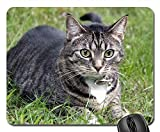 Gaming-Mauspads, Mäusematte, Katzenhaustier-Tiersüßes inländisches Kätzchen-Feline Pelz