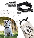 Jack & Russell Premium Hundehalsband Milu - Klettband - reflektierend - Neopren gepolstert - Hunde Halsband div. Größen und Farben - Milu (S (28-35 cm), Schwarz)