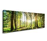 bestpricepictures 120 x 40 cm Bild auf Leinwand grüner Wald im Gegenlicht 5730-SCT deutsche Marke und Lager - Die Bilder/Das Wandbild/der Kunstdruck ist fertig gerahmt