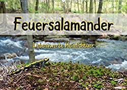 Feuersalamander - Liebenswerte Heimlichtuer (Wandkalender 2020 DIN A2 quer)