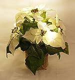 Christstern Weihnachtsstern mit LED Lichterkette weiß H: 26 cm