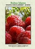 Rubus Idaeus (20) Graines - Framboisier Semences [European Red Raspberry]