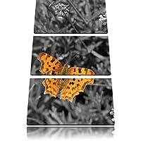 bella farfalla sul prato in fiore bianco / nero 3