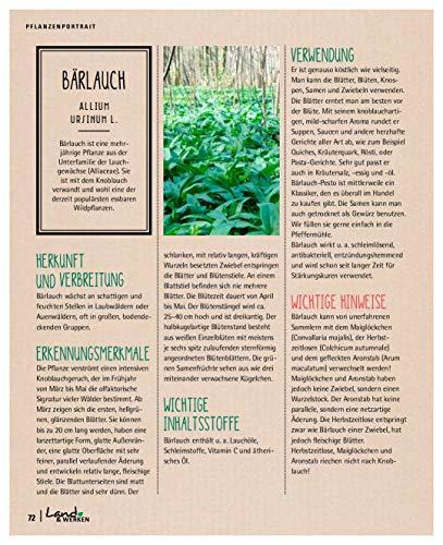 Kräuterkauz: Die faszinierende Welt der essbaren Wildpflanzen - 11