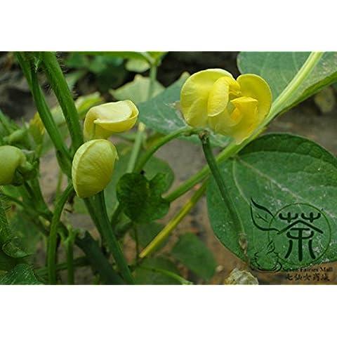 Ampiamente diffusa Azuki Bean Vigna angularis Semi 300pcs, Semi Annual Herb Red Fagioli adzuki grano, Happy Farm cinese Red semi del
