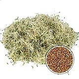 250g BIO Keimsprossen Alfalfa Samen Keimling Sprossen Mikrogrün Microgreens Sprossenanzucht