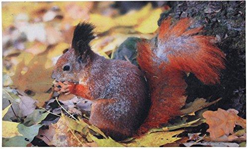 Fallen Fruits RB95 Paillasson Imprimé écureuil