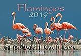 Flamingos 2019: Eleganz in Rosa