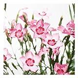 Bilderwelten Spritzschutz Glas - Pink Flowers - Quadrat 1:1, Größe HxB: 59cm x 60cm