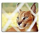 Jun XT Gaming Mousepad-ID: 41453166Caracal emdoneni Lodge Katze Rehabilitation Centre und Spiel Farm Südafrika