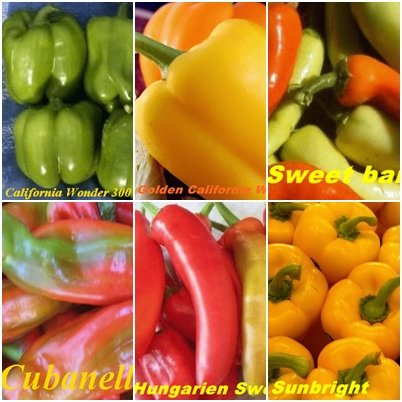 Mescolanza di paprica - 6 generi - 10 semi di generi di paprica popolari!