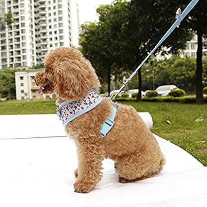 Floral Pattern Tiny Small Dog Harness Leash Lead Walking Chest Strap (S, Blue) 3