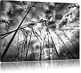 Monocrome, Düsteres Gras vorm Regen , Format: 120x80 auf Leinwand, XXL riesige Bilder fertig gerahmt mit Keilrahmen, Kunstdruck auf Wandbild mit Rahmen, günstiger als Gemälde oder Ölbild, kein Poster oder Plakat