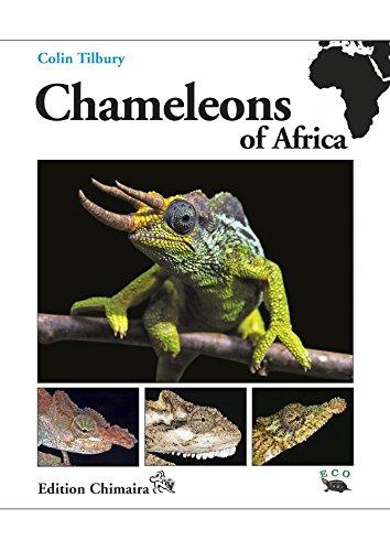 Preisvergleich Produktbild Chameleons of Africa - An Atlas including the chameleons of Europe,  the Middle East and Asia