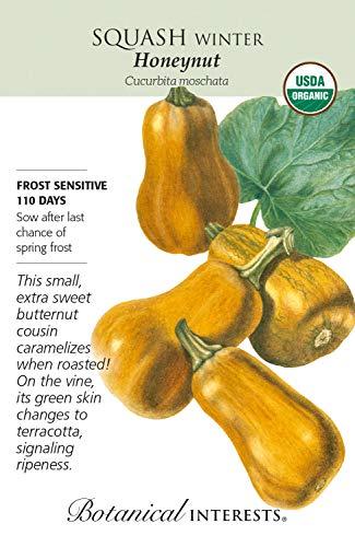 TOMHY Samen-Paket: 20 Stück Zitrone GrassCitratus Vanilla Seeds