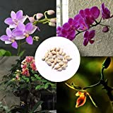 Portal Cool 100 Teile/beutel: 100 Stücke Seltene Mini Orchidee Samen Blume Phalaenopsis Indoor Garden Rr6