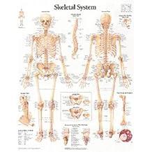 Skeletal System Paper Poster