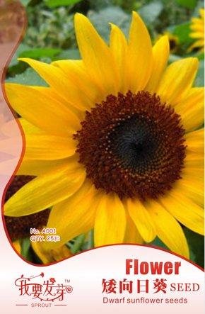 Hot Sale pavot d'Islande Couleurs mélangées Couper Graines de fleurs bricolage SeedsAndPlants Jardin des Plantes 200 particules / lot