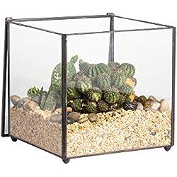 Terrarios para cactus en frascos