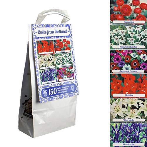 Inter Flower - 150 Blumenzwiebeln - Mix - 6 Sorten - seperat verpackt - Gladiolen, Lilien, Anemonen, Iris, Ranunkeln - in Geschenkverpackung - wunderschön, einfach, natürlich