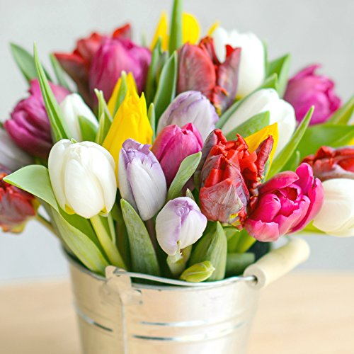 little-sweatheart-spring-tulip-vintage-bucket-chocolates-fresh-flowers-fast-delivery-birthday-bouque