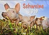 Schweine 2019: Der Sympathische Schweine-Kalender mit den charmanten Namen
