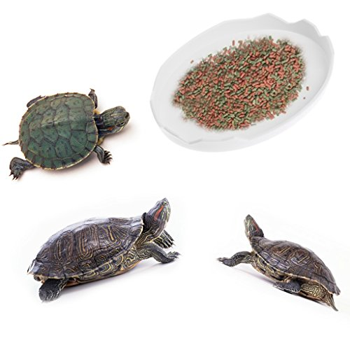 Yanhonin Cuenco Reptile para Reptiles y Anfibios, cáscara de Huevo Fiambrera, Cuenco de Agua, Accesorios terraristiques